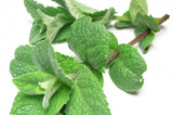 Herbal Medicine – The Power of Peppermint