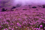 Best time to visit Kerala, Munnar's famed neelakurinji flower to bloom after 12 years