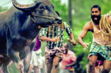 India's Oscar Entry 'Jallikattu': About Seething Brutality of Everyday Life