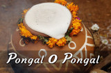 Pongal O' Pongal: More than a Harvest Festival