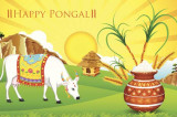 Pongal 2016: From Cooking Up a Feast to Decorating Rangolis and Bull Baiting