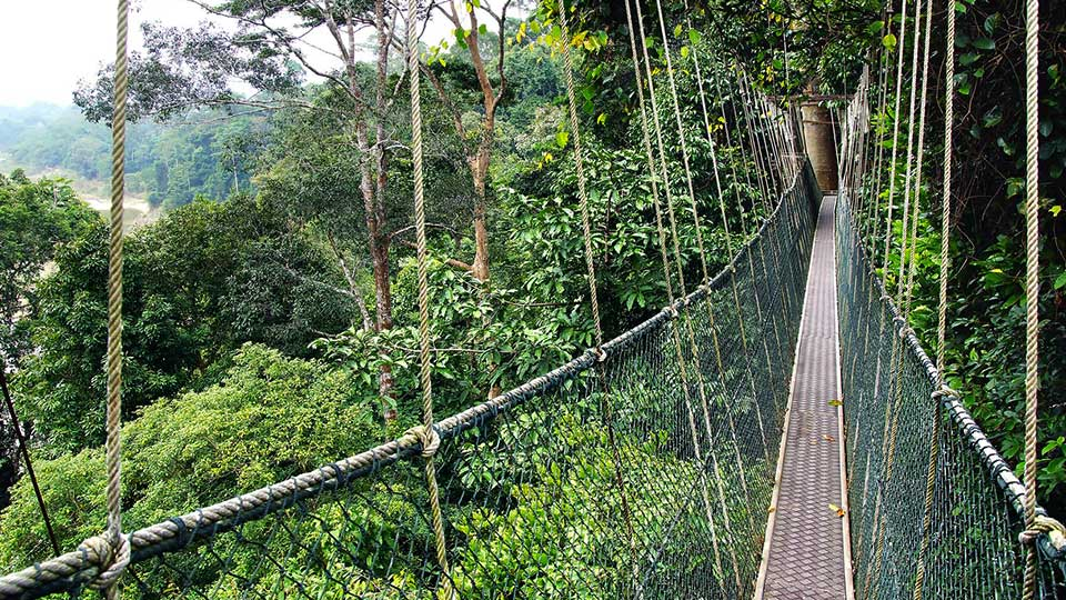 Running-Wild-Malaysia-National-Parks-1