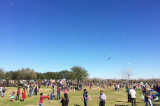 A Victim of its Own Success,  Kite Flying Festival Considers Future Options