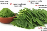 This herb could cure 5 different types of Cancer