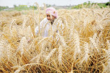 Narendra Modi's budget, in policy shift, expected to focus on rural India