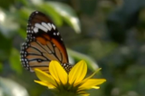 First butterfly park opens in Kanpur