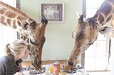 Explore the world of giraffes while staying with them in Kenya!