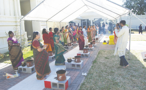 Pongal / Sankarati celebration with traditional sweet Pongal in brass pots on earthen stove.