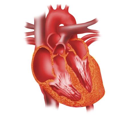 02---Diagram-of-a-heart---i
