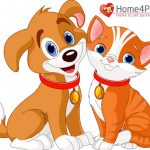 homepet-in-1