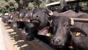 Two slaughterhouses were sealed by the authorities here on Sunday night, a development that comes within hours of BJP leader Yogi Adityanath taking over as the Uttar Pradesh Chief Minister.(PTI Representative Photo)