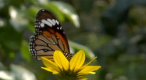 Planning to visit Kanpur? Don't forget to visit the new butterfly park.(Source: ANI News Official/YouTube)