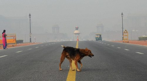 """Pollution in the capital rose to """"severe"""" this week after revelers let off fireworks to mark the Hindu festival of Diwali. (Source: PTI Photo by Kamal Singh)"""